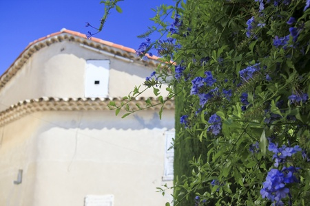 d���azur: bright blue flowers on the side of a wall in the quaint village of Mougins near Cannes in the south of france the cote d azur Stock Photo