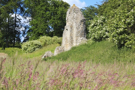 norman castle: overgrown ruins of berkhamsted castle in hertfordshire england, built by the normans in the motte and bailey style Stock Photo