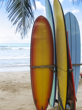 surfboards standing on the beach under a palm tree on kuta beach bali indonesia photo