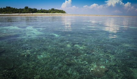 beneath the surface: the coral reef below the water and white sand beach of sipadan island in sabah malaysian borneo Stock Photo