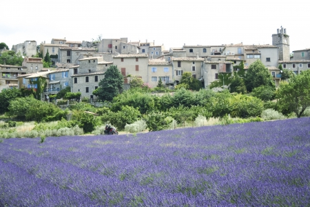 provencal: motorbike tour french lavender fields