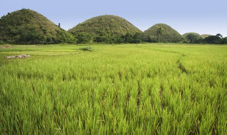 lush green rice fields surrounding the chocolate hills of bohol island in the philippines photo
