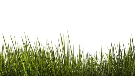 背の高い草は白い背景の上閉じます。クリッピング パスが含まれています