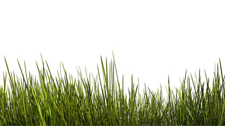 tall grass close up on white background. clipping path included photo
