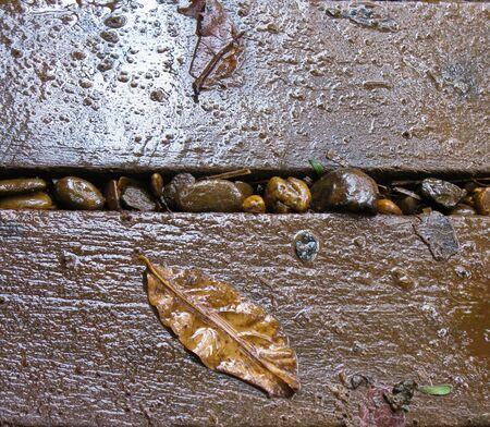 Leaf on wet wooden bridge