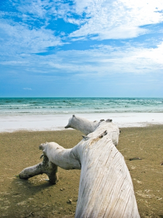 Blue sea and sky with log on Chao Lhao beach, Chanthaburi, Thailand Stock Photo