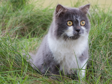 Persian cat sit in green yard photo