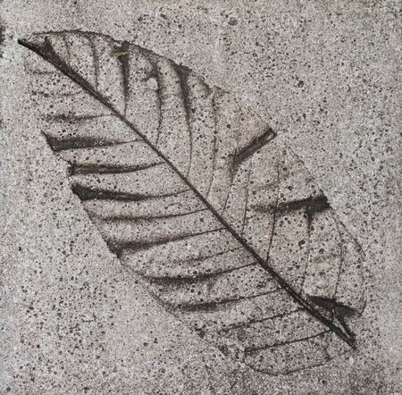 Cement floor tile with leaf print Stock Photo