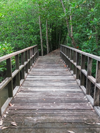 Wooden bridge lead to mangrove forest photo