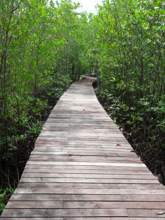 Boardwalk surrounded by mangrove plant in mangrove forest