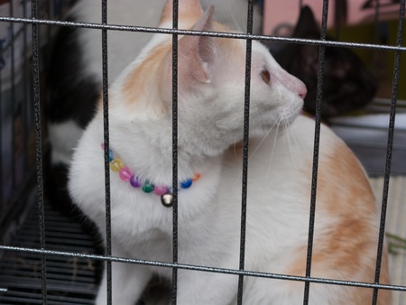 Bangkok, Thailand - August 11 : Stray cats from the Project Rakmaw are waiting for adoption on August 11, 2012 at Jatujak weekend market, Bangkok, Thailand.