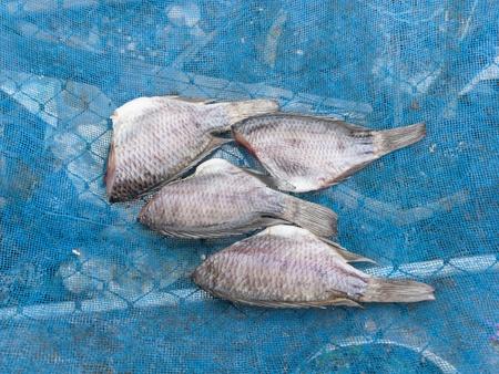 gourami: Dried salt gourami fish on blue net Stock Photo