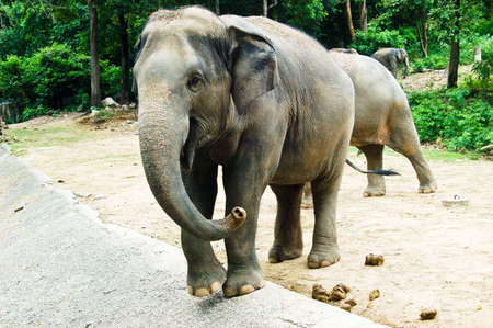 beautiful young elephant in zoo