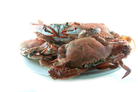 cooked crab on a  plate in white background photo