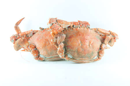 cooked crab on a  plate in white background