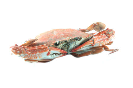 Cooked crab on a white background photo