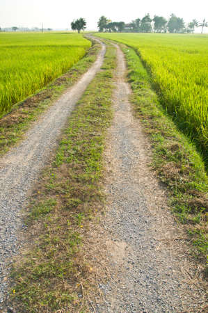 Countryside road. Beautiful summer day  in field at Thailand through green countryside fields.