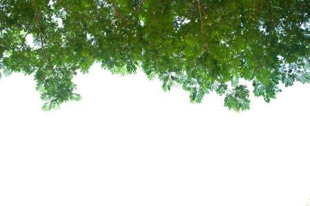 從蟲眼視圖綠葉和白色的天空 版權商用圖片