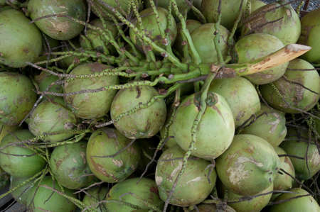 Fruit; Group of Green Coconut photo