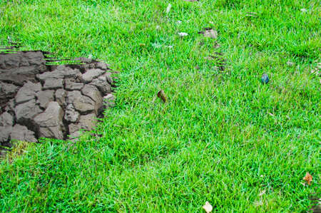 Concept of business green grass growing trough dead soil photo