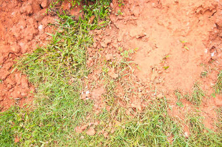 red clay: grass grow in red clay