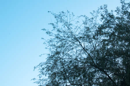 leaves on blue background