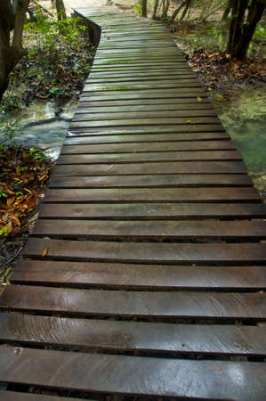 boardwalk trail: Wood path after raining through tropical forest