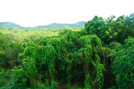 green vegetation: view of the lush green vegetation   trees growing and mountains Stock Photo