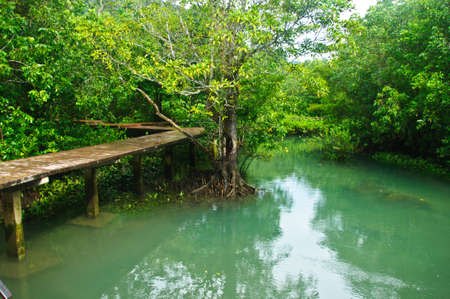Khlong Song Nam clear tropical stream, Krabi Province of Thailand. photo