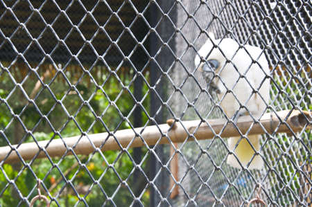 Sulphur Crested Cockatoo inside a cage photo