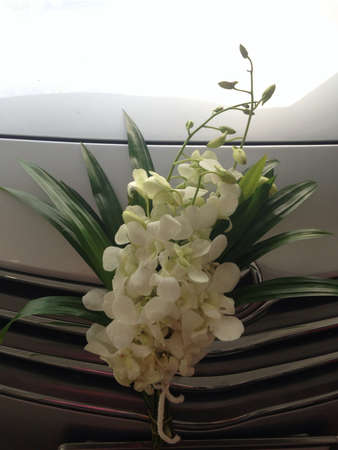 bright: Orchids white in car Stock Photo