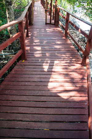 Wooden walkway in mangrove forest photo