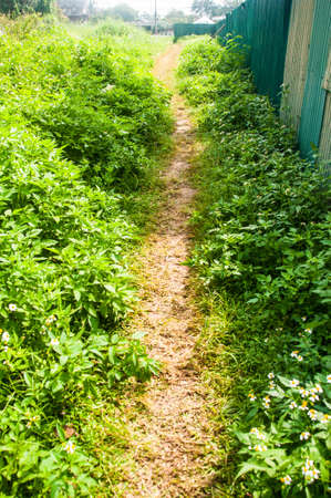 during the day: pathway into garden during day time