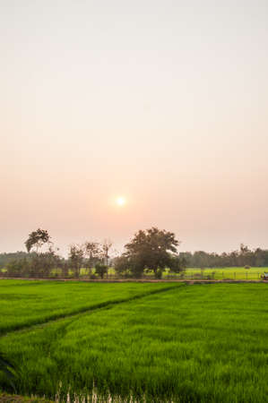 Sunset view over paddy field photo