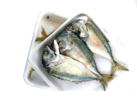 pan tropical: Mackerels steamed in a pack on white background Stock Photo