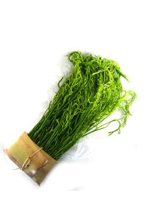 cha om: Acacia pennata - Cha-om Thai Food