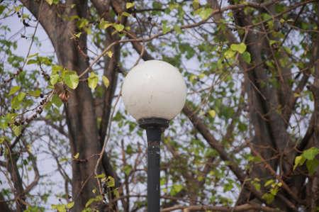 garden lamp: garden lamp on the background of tree