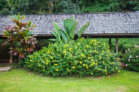 landscape garden: Beautiful Landscape Garden,Thailand