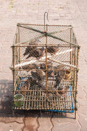 incarcerate: Many birds in a cage