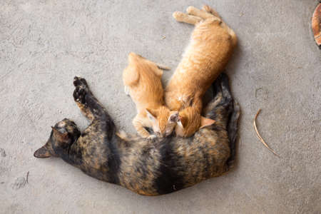 feeds: The cat feeds a kitten on ground