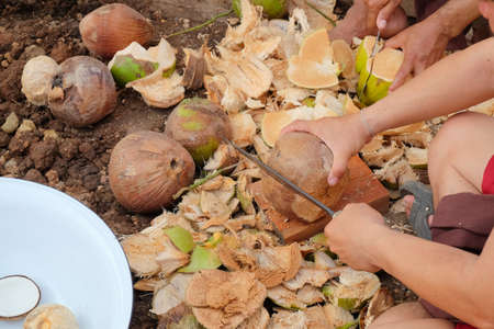 villagers: Stripping coconut by villagers in Thailand