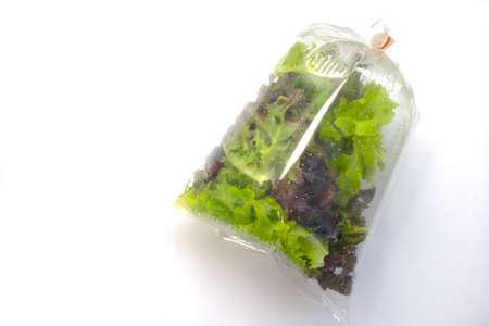 Hydroponic plants, green oak and red oak lettuces leafs in plastic bag