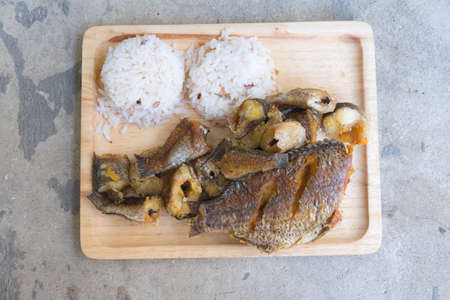snakehead: Thai food ready served Organic jasmine rice with fried of striped snakehead fish.