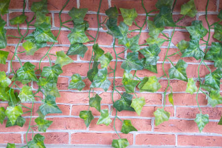 Artificial green Ivy gourd leaves with brick wall