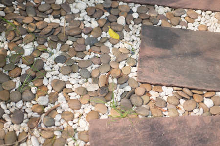 Stone pathway in the garden after rain