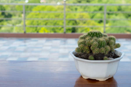 Beautiful green succulent plant or cactus in a pot. Tropical houseplant for modern decoration home in growing or gardening concept.