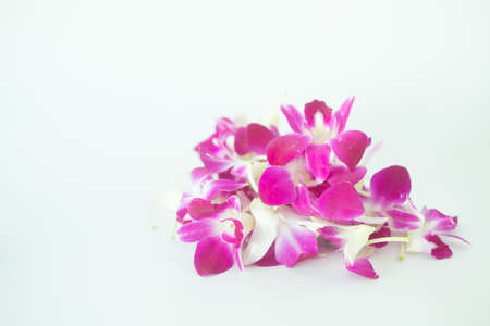 Violet orchid on white background, Close up
