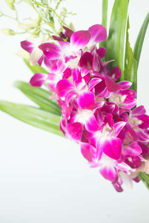 Bouquet purple orchid flower for pray respect to Buddha on white background Stock Photo