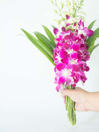 Man hand holding violet orchid with pandan for Buddhist begging to success in life isolated on white background.