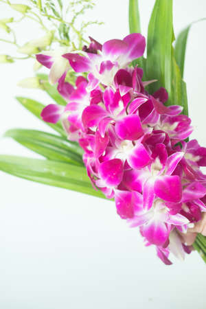 Closeup violet orchid with pandan for buddhist religious ceremony Thai traditional. Religion concept Stock Photo